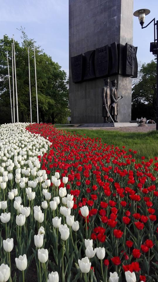 Tulipany pod Pomnikiem Powstańców Wielkopolskich